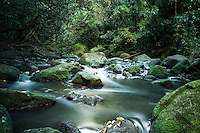 A stream flows over moss-covered rocks near Jackass Ginger Pool along the Judd Hiking Trail, Nu'uanu, O'ahu.