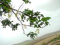 A hanging tree branch overlooking village landscape