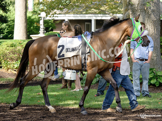 Our Princess before The Cre Run Oaks (gr 2) at Delaware Park on 9/1/14
