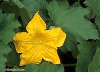 HS24-141g  Pumpkin - flower