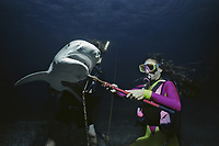 Divers remove long-line fishing hook from Tiger Shark (Galeocerdo cuvier), Bahamas - Caribbean Sea.