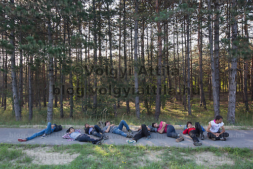 Illegal migrants take a rest next to a forest after crossing the border between Hungary and Serbia near Roszke (about 174 km South of capital city Budapest), Hungary on August 30, 2015. ATTILA VOLGYI