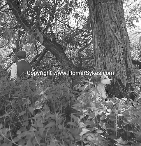 The Valley Mink Hounds..Mink are very elusive, they climb trees and swim river, and often  manage to slip quietly away when spotted. Near Aldermaston, Berkshire...Hunting with Hounds / Mansion Editions (isbn 0-9542233-1-4) copyright Homer Sykes. +44 (0) 20-8542-7083. < www.mansioneditions.com >.