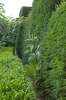 A path winds between a yew (taxus) and a box (buxus) hedge at Great Dixter
