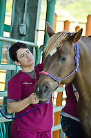 Vet Technology Students Equine