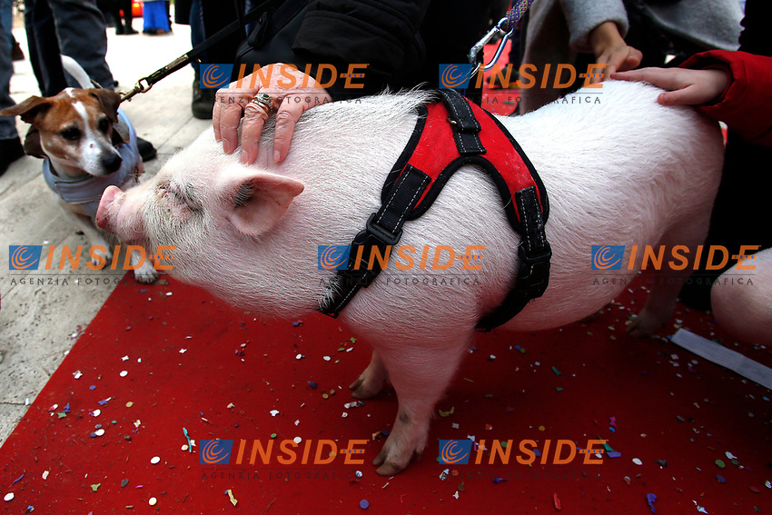 A pig and a dog<br /> Rome February 10th 2019. Celebrations for Chinese New Year 2019 in Rome. This year begins the year of the pig.<br /> Foto Samantha Zucchi Insidefoto