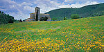 Tuscany, Italy<br /> Tower and  roof line of the Abbazia Sant' Antimo, rises above a field of wildflowers in southern Tuscany