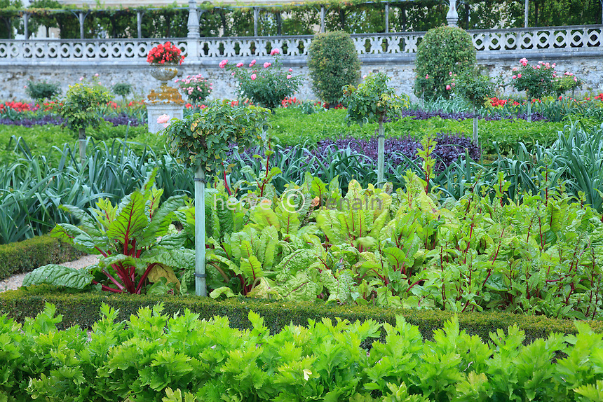 "France, Jardins du château de Villandry, dans le potager traité à la française // France, Gardens of the castle of Villandry, the kitchen garden treated like a ""jardin à la française""."