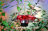 01162-093.01 Ruby-throated Hummingbirds (Archilochus colubris) on Droll Yankees Little Flyer-2 Hummingbird feeder Shelby Co. IL