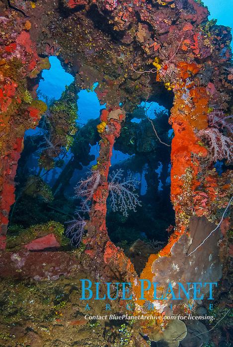upper decks, encrusted, soft corals, coral reef scenic, Fujikawa Maru in Truk Lagoon, Operation Hailstone, Wreck, WWII, Japanese shipwreck, Chuuk, Micronesia, Truk, Chuuk Lagoon, Pacific Ocean