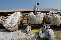 INDIA Madhya Pradesh , farmer sell harvested cotton at cotton auction market in Kasrawad / INDIEN Madhya Pradesh , Bauern verkaufen ihre Baumwollernte auf einer Auktion dem Markt in Kasrawad