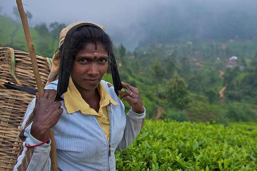 Tea plantations and workers at Nuwara Eliya- Horton Plains, Sri Lanka