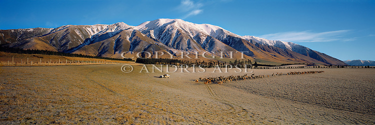 Feeding Deer at Mount Hutt Station. Canterbury Region. New Zealand.