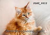 Marek, ANIMALS, REALISTISCHE TIERE, ANIMALES REALISTICOS, cats, photos+++++,PLMP6412,#a#, EVERYDAY