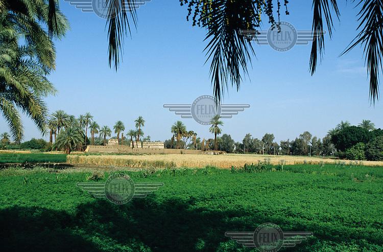 Farmland on the edge of the River Nile.