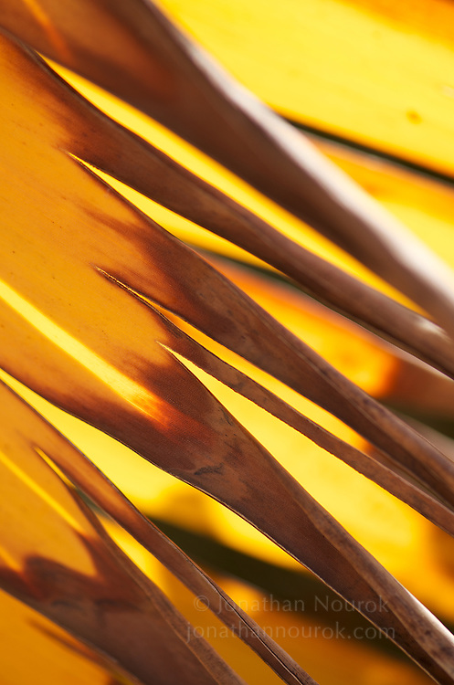 A close-up of a drying palm frond.