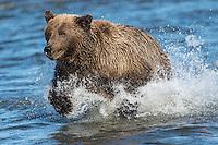 Alaska Salmon Run 2012
