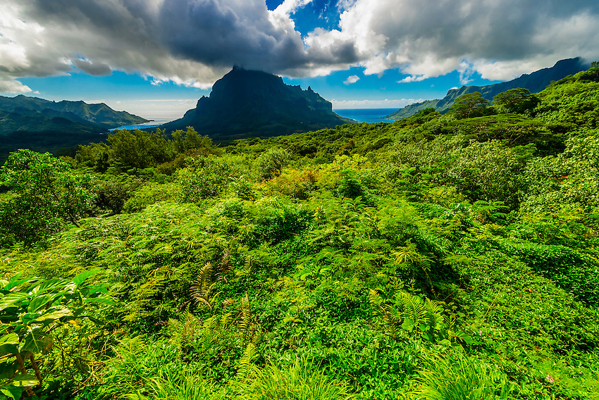 View from the Belvedere of the island of Moorea (Opunohu Bay on left and Cook's Bay on right), Society Islands, French Polynesia.
