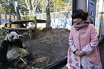 Tetsuko Kuroyanagi, actress and honorary chairwoman of the Panda Protection Institute of Japan, looks at a female giant panda Shin Shin at Ueno Zoo in Tokyo, Japan on March 12, 2018. (Photo by Koji Aoki/AFLO)