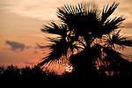 Grand Bahama Island, The Bahamas; the sun sets behind a Palmetto on the islands West End