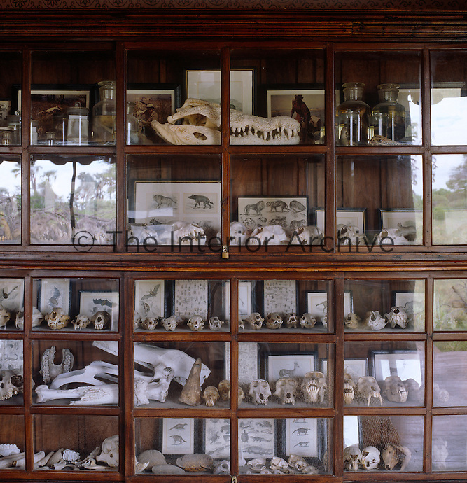 A glass-fronted display case contains a collection of mammal skulls including that of a huge crocodile shot by Jack