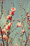 Photo art of textured pink blossoms against blue sky
