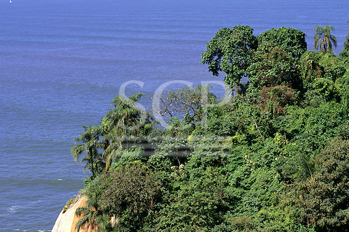 Sao Paulo State, Brazil. Reserve of threatened Mata Atlantica Atlantic rain forest.