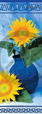 Jacek, FLOWERS, portrait, macro, photos, PLSE, PLSEbak16,#F# Blumen, flores, retrato