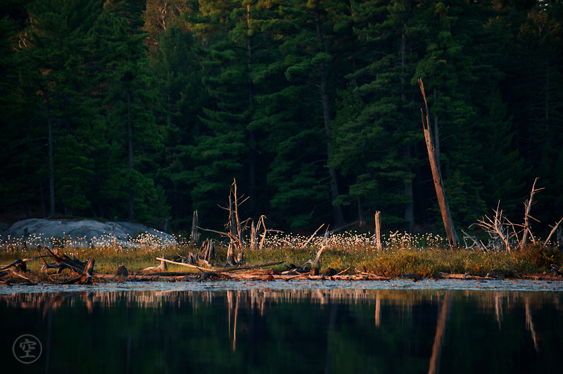 Early morning sun lights the forested shores of Balsam Lake, Killarney Provincial Park, Ontario.
