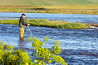 Atlantic Salmon Catch and Release Fly Fishing in Iceland. Fly fisherman casting to salmon in Svarta river.
