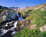 Waterfalls, and alpine wildflowers in the American Basin (12,300 feet) below Cinnamon Pass, San Juan Mountains, southwest Colorado, USA .  John leads wildflower photo tours into American Basin and throughout Colorado. All-year long. John guides custom photo tours in the Sneffels Range and throughout Colorado. .  John leads private photo tours throughout Colorado. Year-round Colorado photo tours.