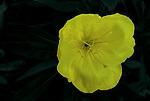 Flower at Krause Springs Texas