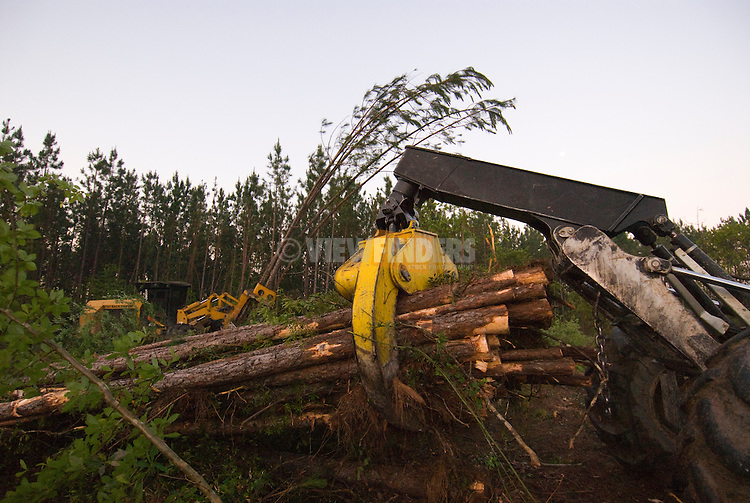 Feller Buncher and Yarder, Southern Pine Forest
