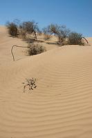 Algodones Dunes, Imperial County, California