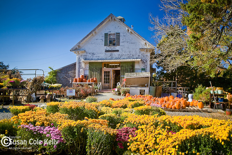 Tobey Farm displays pumpkins and autumn flowers in Dennis, Cape Cod, MA, USA