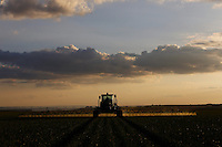 Sao Gotardo_MG, 27 de abril de 2015<br /> <br /> Fotos dos produtores de alho na regiao de sao gotardo.<br /> <br /> Foto: MARCUS DESIMONI / NITRO