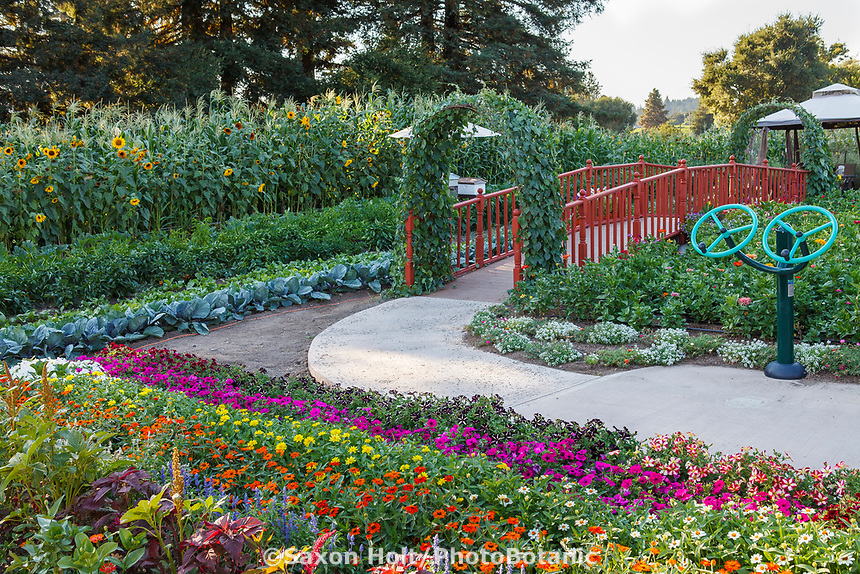Therapeutic designed path for seniors in Community Garden of Healdsburg Senior Living Center, California