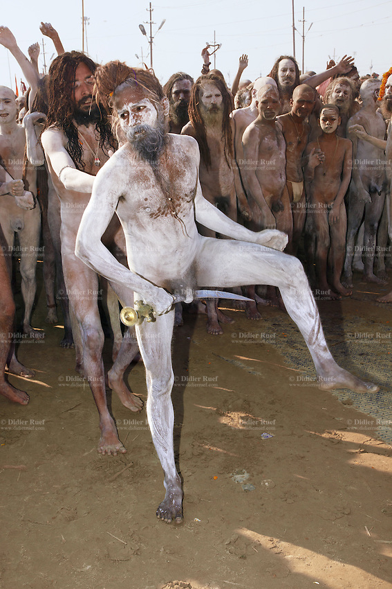 """India. Uttar Pradesh state. Allahabad. Maha Kumbh Mela. Royal bath on Mauni Amavasya Snan (Dark moon). The ritual """"Royal Bath"""" is timed to match an auspicious planetary alignment, when believers say spiritual energy flows to earth. Naga (naked) Sadhus celebrate their joy after taking a dip in Sangam and worship the river Ganges. The Naga Sadhus have their bodies smeared with ashes. They were once warriors, that's why they still carry weapons, such as a sword. The sword is the weapon of Kali who is the Hindu goddess associated with empowerment. The Kumbh Mela, believed to be the largest religious gathering is held every 12 years on the banks of the 'Sangam'- the confluence of the holy rivers Ganga, Yamuna and the mythical Saraswati. In 2013, it is estimated that nearly 80 million devotees took a bath in the water of the holy river Ganges. The belief is that bathing and taking a holy dip will wash and free one from all the past sins, get salvation and paves the way for Moksha (meaning liberation from the cycle of Life, Death and Rebirth). Bathing in the holy waters of Ganga is believed to be most auspicious at the time of Kumbh Mela, because the water is charged with positive healing effects and enhanced with electromagnetic radiations of the Sun, Moon and Jupiter. In Hinduism, Sadhu (good; good man, holy man) denotes an ascetic, wandering monk. Sadhus are sanyasi, or renunciates, who have left behind all material attachments. They are renouncers who have chosen to live a life apart from or on the edges of society in order to focus on their own spiritual practice. The significance of nakedness is that they will not have any worldly ties to material belongings, even something as simple as clothes. A Sadhu is usually referred to as Baba by common people. The Maha (great) Kumbh Mela, which comes after 12 Purna Kumbh Mela, or 144 years, is always held at Allahabad. Uttar Pradesh (abbreviated U.P.) is a state located in northern India. 10.02.13 © 2013 Didier Ruef"""