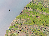Bison photographed from above during an aerial shoot of Yellowstone.