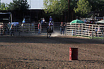 MFHS Barrels Rider 326