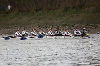 Crew: 239   Putney Town 'Novice'   W Devel<br /> <br /> Quintin Head 2019<br /> <br /> To purchase this photo, or to see pricing information for Prints and Downloads, click the blue 'Add to Cart' button at the top-right of the page.