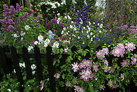 Perennial Flower Garden with Picket Fence, Clematis Josephine climbing vine, Iris, many different mixed types