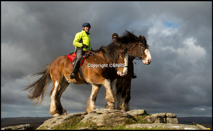BNPS.co.uk (01202 558833)<br /> Pic: PhilYeomans/BNPS<br /> <br /> Tim Ancrum.<br /> <br /> Adventure Clydesdales on Dartmoor are doing their bit to save the magnificent heavy horses by offering treks across the remote parts of the moor on these huge beasts.<br /> <br /> Owner Tim Ancrum  said 'We have to find modern uses for these beautiful animals or their numbers will continue to dwindle away. They're excellent trekking horses, you get a spectacular view, and their as comfortable as an old armchair'<br /> <br /> Now listed as vulnerable by the Rare Breeds Survival Trust their are less than a thousand breeding mares left of a breed that was once commonplace on most of the farms in Scotland before the arrival of the internal combustion engine.