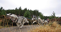 Aviemore annual Sled Dog Rally