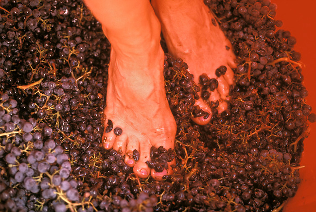 Grape stomping in Napa Valley