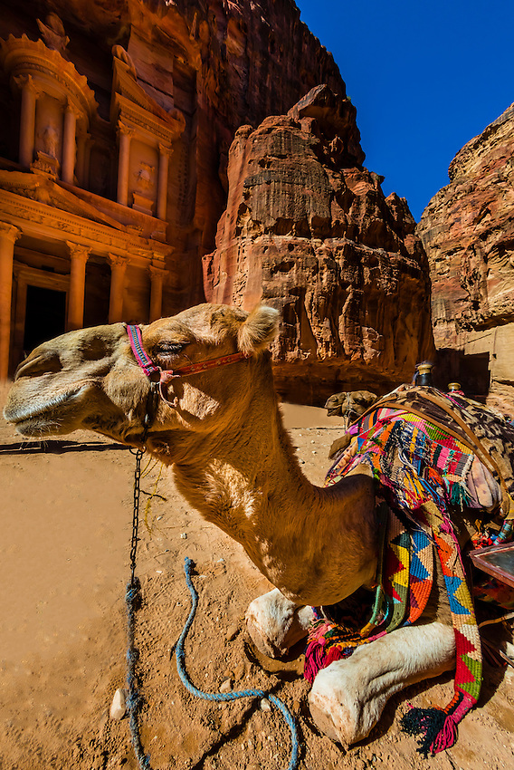Camel in front of The Treasury (Al-Khazneh), Petra Archaeological Park (a UNESCO World Heritage Site), Petra, Jordan.