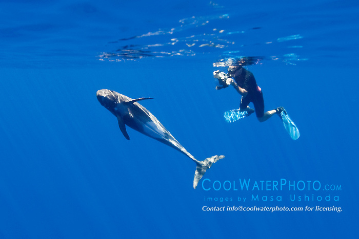 marine wildlife photographer, James D. Watt, photographing pygmy killer whale, Feresa attenuata, Kona, Big Island, Hawaii, USA, Pacific Ocean, Model Released - MR#: 000044