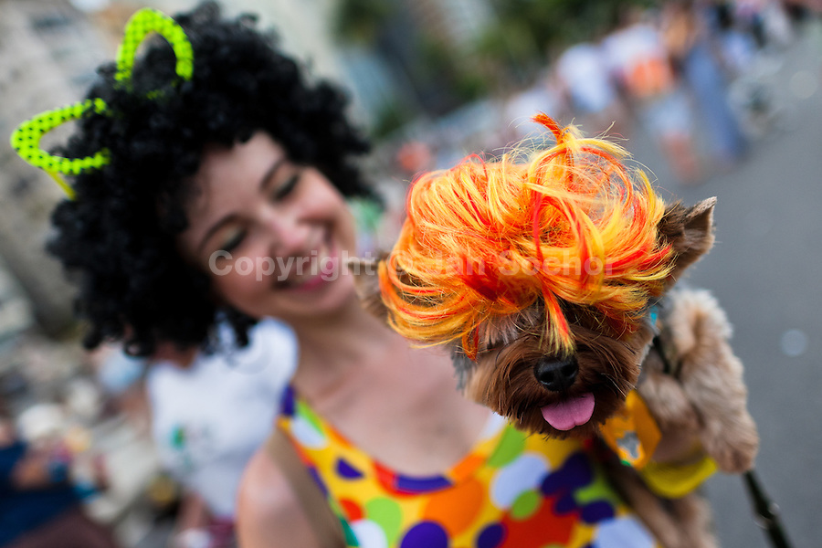 A dog, wearing a fancy wig, takes part in the Blocao pet carnival show at Copacabana beach in Rio de Janeiro, Brazil, 12 February 2012.