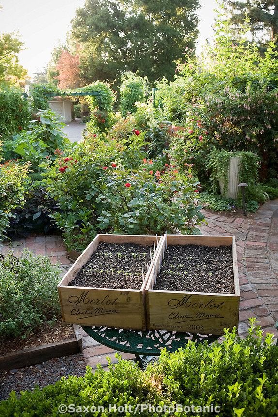 Vegetable seedlings starts in rustic crates in Rosalind Creasy organic ornamental edible landscaping small space patio garden