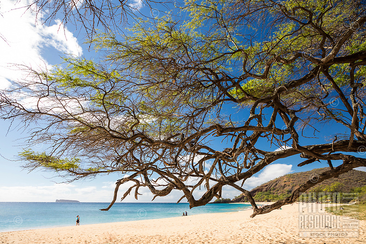 Beyond a keawe tree, beachgoers enjoy a clear day at Makena Beach, Maui, with Molokini Island in the distance.